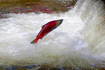 Salmon Weir Visit